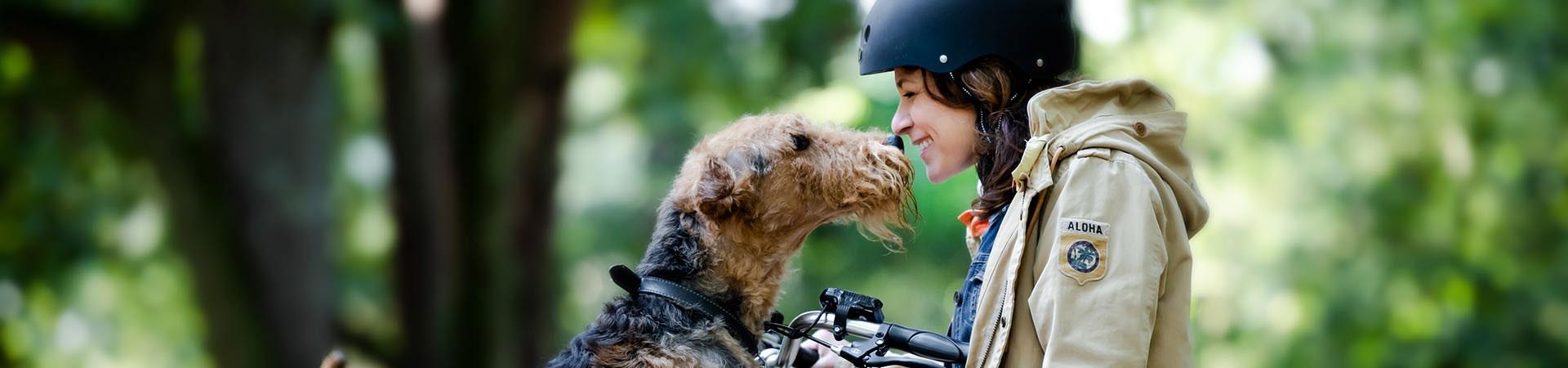 Vélos cargo pour chiens